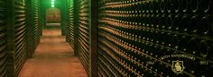 The cave tour at Schramsberg is my favorite tour in Napa Valley.  Over 2 Million bottles are stored in the naturally controlled climate going through a first and second fermentation.  At the end, some of the best sparkling wine in the world will emerge!