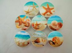 Set Of 8 Sandy Beach And Sea Shells Oversized By TwistedRDesign
