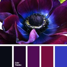 black palettes with color ideas for decoration your house, wedding, hair or even nails. | Page 10 of 13