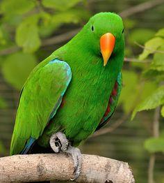 Kansas City Zoo Aviary