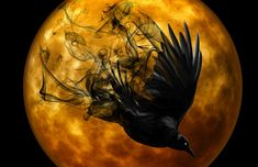 Raven - Free images on Pixabay