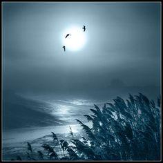 Moon Flight! by adrians_art http://flic.kr/p/687mLP
