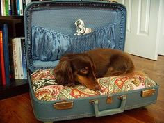 Suitcase dog bed! This is what I want to do with my red suitcase for remy