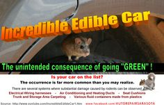 How vehicels can be damaged by rodents and why using soy in seats and wiring is dangerous Car Care Tips, Green Cars, Peanut Oil, Incredible Edibles, Storage Area, How To Protect Yourself, Electrical Wiring, Rodents, Car Manufacturers