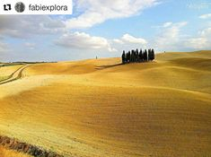 Muy linda esta foto de @fabiexplora, un paisaje amarillo y azul en la Toscana que parece una pintura. Gracias!  #mycornerofitaly #repost #tuscany #tuscanygram #landscape #toscana #italia #italy #ilikeitaly #yellow #nature #naturelovers #landscapelover #hills #amarillo #giallo #fields #italygram #italian #italylovers #travel #travelling #explore #exploring #travelingram #beautiful #amazing #view #panorama #reposting Toscana Italia, Land Scape, Country Roads, Amazing, Travel, Beautiful, Instagram, Blue Nails, Scouts