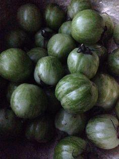 pomodori verdi