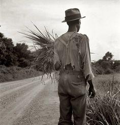✯ 1936 Cotton-picker near Vicksburg, Mississippi ✯