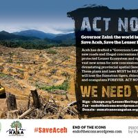 If approved, this new plan and the new regulation will result in the rapid devastation of most of Aceh's remaining lowland forests, the last stronghold for the Sumatran orangutan, tiger, rhino and elephant. This also totally undermines the legal status of the world renowned Leuser Ecosystem; the last place on earth where tigers, orangutans, elephants and rhinos roam together in the wild.