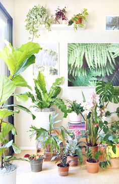 Come tour our happy indoor garden ! A list of 18 best indoor plants plus 5 essential tips on how to grow healthy house plants! Make your home more beautiful with these showy foliage and flowering plants that thrive in low light conditions, and are so easy to grow! - A Piece of Rainbow