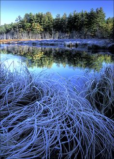 'Blue Frost' photo by Patrick Zephyr; Quabbin Reservior, Belchertown, Massachusetts