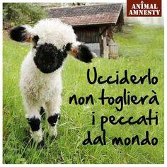 Agnellino