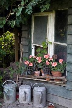 Old Watering Cans...potted plants.