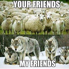 Dumbing Down People into Sheeple Wolf Spirit, Spirit Animal, Lone Wolf Quotes, Of Wolf And Man, Funny Animals, Cute Animals, Wolf Stuff, Wolf Love, Warrior Quotes