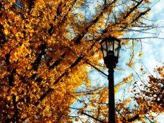 Golden Lamp Light by RDColwellArtPrints on Etsy, $15.00