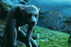 """Which """"Harry Potter"""" Creature Are You. I got a Werewolf! What'd you get?"""
