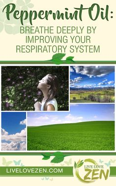 Breathe deeply by improving your overall respiratory system with oregano essential oil. Oregano essential oil acts as an expectorant, loosening up mucus and phlegm that congests the respiratory tract and causes excessive coughing. Peppermint Essential Oil Benefits, Lavender Essential Oil Benefits, Oregano Oil Benefits, Lavender Benefits, Oregano Essential Oil, Peppermint Plants, Peppermint Oil, Making Essential Oils, Carrier Oils