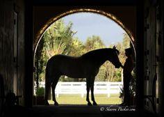 <3horse silhouette