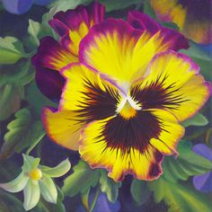 """Painting by Judy Leila Schafers, """"Vivacious!"""", original acrylic, 16"""" x 16"""", framed, available,  Inspired by a pansy grown from seed in my garden"""