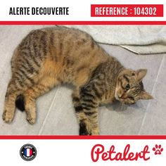 14.01.2017 / Chat / Hazebrouck / Nord / France
