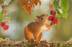 Wonderful World of Animals. This page is about cute and funny animals and pets. Nature Animals, Animals And Pets, Baby Animals, Funny Animals, Cute Animals, Beautiful Creatures, Animals Beautiful, Cute Squirrel, Squirrels