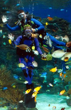 Rainbow Rock - Ripley's Aquarium of MyrtlebeachRipley's Aquarium of Myrtlebeach