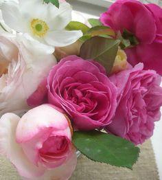 ZsaZsa Bellagio – Like No Other: Dreamy, Elegant & Oh So Beautiful