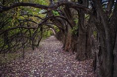 Kansas's Tunnel Of Trees Is Positively Magical And You Need To Visit | Only In Your State