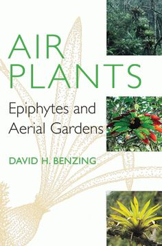 """Read """"Air Plants Epiphytes and Aerial Gardens"""" by David H. Benzing available from Rakuten Kobo. Often growing far above the ground, """"air plants"""" (or epiphytes) defy many of our common perceptions about plants. Air Plants Care, Plant Care, Epiphyte, Cornell University, Vascular Plant, Science Biology, Water Conservation, Garden Spaces, Garden Crafts"""