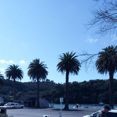 View from my coffee spit this morning in #whitianga