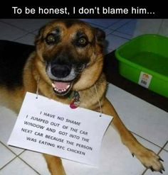 The 100 Best Dog Memes Ever The 100 Best Dog Memes Ever,coole Hunde. 100 Dog Memes That Will Keep You Laughing For Hours Memes Humor, Funny Dog Memes, Funny Animal Memes, Cute Funny Animals, Funny Animal Pictures, Funny Cute, Funny Photos, Funny Dog Shaming, Baby Shaming