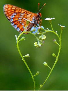 Gorgeous Butterfly on Heart
