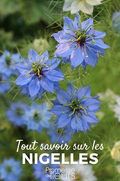 Les 55 meilleures images de Fleurs bleues | Blue flowers en ...