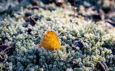 #beautiful #land #ground #frost #winter #sunlight #closeup #Finland #kaunis #huurre #talvialkaa