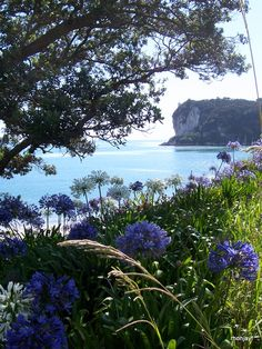 Flaxmill Bay, Whitianga, New Zealand