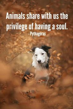 all animal lovers know that animals have a soul. www.hillsidevets.co.uk #dogsayings