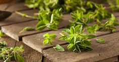 Oregano oil has several health benefits, fighting cancer is one of them. Learn about the research and medicinal benefits of oregano oil.
