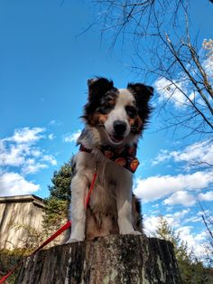 Puppy Sitting, Puppies, Mountains, Dogs, Nature, Travel, Animals, Cubs, Naturaleza