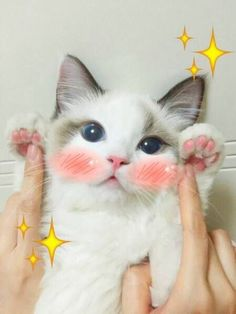 Most cat owners are convinced that cats, especially their cats, are truly amazing. Cats are endearing, mysterious, loveable and kooky; Cute Funny Animals, Cute Cats, I Love Cats, Crazy Cats, Kittens Cutest, Cats And Kittens, Cute Cat Memes, Funny Memes, Chesire Cat
