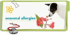 Similar to hay fever in humans, pets can suffer from seasonal allergies too. Here are some steps you can take to help lessen the signs, from your friends at Petplan #pet insurance.