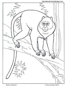 monkey coloring pages guenon coloring pages