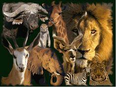 afrika dieren