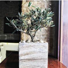 Neolea  Extra virgin olive oil (@neoleaofficial) • Instagram-foto's en -video's Olive Oil, Plants, Instagram, Plant, Planets