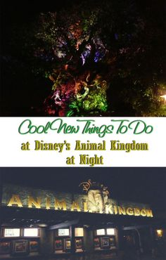 Disney's Animal Kingdom is now open at night! Find out all about the evening attractions, shows, and other experiences for your next Walt Disney World family vacation.