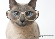 Photographic Print  Cat in Glasses  5x7 by instantt on Etsy, $17.00