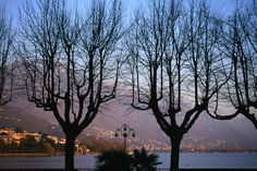 Bare trees, Switzerland  Bare trees in front of Locarno and Lake Maggiore at dusk.