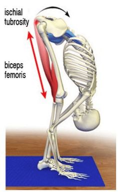Read Later: Download this Post as PDF >> CLICK HEREThe yard-work syndrome Now that summer is upon us, I'm beginning to see more clients complaining of bending and twisting back pain. In most people, the lumbar spine and sacrum are pretty stable during forward bending and lifting, but not so when sidebending and/or rotation are …