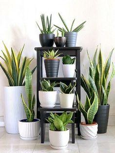 House Plants Decor, Garden Plants, Potted Plants, Cactus Plants, Greenhouse Plants, Silk Plants, Vegetable Garden, Garden Living, Home And Garden