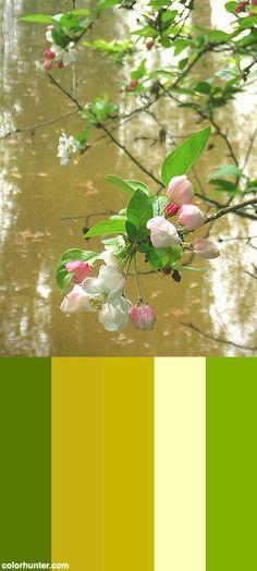 Fresh Color Scheme from colorhunter.com