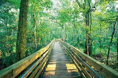 Apalachicola National Florida
