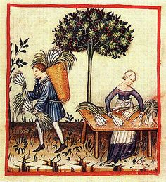 Harvesting Leeks. Notice the basket on his back and her apron with a fringe end. The Tacuinum of Vienna - late 14th or early 15th century